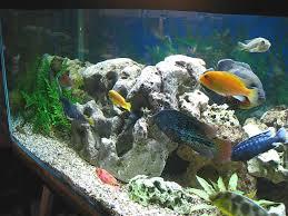 aquarium tank 850 litre 230 gallon cichlides américain africain
