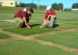 Pumpkin Patch Lawrence And Benton by Weather Promotes Growth Of Turf Weeds Diseases Mississippi