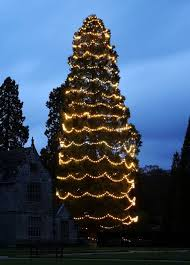 Britains Biggest Christmas Tree Is Decorated For The Festive Season