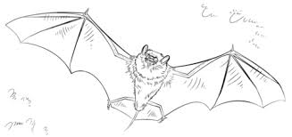 Click To See Printable Version Of Bat Coloring Page