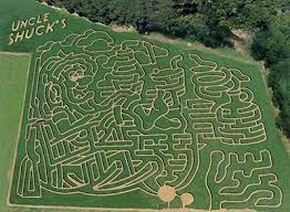 Pumpkin Patch Gainesville Texas by 103 Best A Maze Thing Images On Pinterest Corn Maze Topiaries