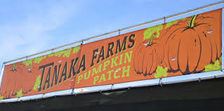 Tanaka Pumpkin Patch Irvine by Tanaka Farms Pumpkin Patch Field Trip Aoi College Of Languages