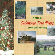 Wadsworth Ohio Christmas Tree Farm by About Galehouse Tree Farm