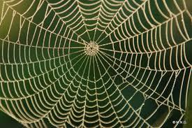 la composition et la structure du fil de soie