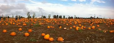 Hunter Farms Pumpkin Patch Olympia Wa by Washington State Pumpkin Patches And Corn Mazes
