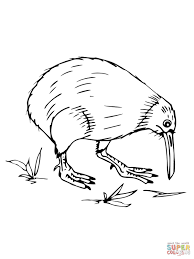 Kiwi Bird Coloring Page