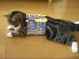cats and yogurt cat barely fits in yogurt box