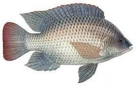 Into Florida Fish