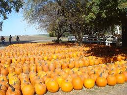 Best Pumpkin Patch Madison Wi by 13 Best Everywhere A Sign Images On Pinterest