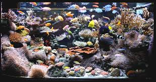 Aquascape Ideas – Home And Furnitures Aquarium Aquascaping Rocks Aquascape Designs Ideas Project Reef Rock 21 Dry Walt Smith Bulk Supply Review Real Generation 4 Digitalreefs News Info How To Live Purple Live Rock Youtube Updated Clear Pics Newbies Attempt At Aquascaping So Far 3reef Design Aquafishvietcom Bring Back The Wall News Builders Keeping Austin Club Walls For A Tank Callorecom River Suggestion Planted Forum