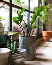 klima psyche wohlbefinden wie zimmerpflanzen unser leben