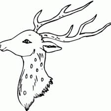 AnimalPrint Of Deer Coloring Pages Fun Head Ideas Page With Array