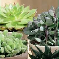 entretien plante grasse d interieur plante grasse cactées et plantes grasses autres marques maison