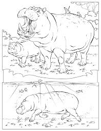 Animal Coloring Pages National Geographic