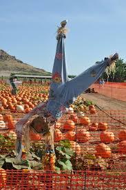 Tanaka Farms Pumpkin Patch Directions by Blog Aoi College Of Languages