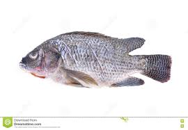 Download Gutted Scaled And Sliced Nile Tilapia Fish On White Background Stock Photo