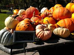 Portland Maine Pumpkin Patch by Find Corn Mazes In Dayton Maine Pumpkin Valley Farms In Dayton Maine