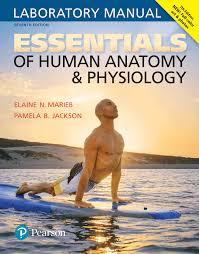 Marieb Keller Essentials Of Human Anatomy Physiology 12th