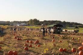Pumpkin Picking Nj by Duffield U0027s Farm Market Birthday Parties Hayrides Field Trips
