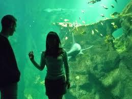 momento en pareja picture of aquarium la rochelle la