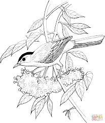 Flores Decorativas Y Aves Libro De Colorante Para Los Adultos Y