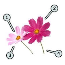 How to draw cartoon flowers step 1