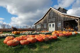 Pumpkin Patch Nashville Area by Southern Pumpkin Patches You Have To Visit This Fall