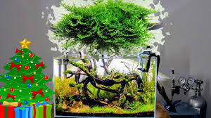 Mini Christmas Moss   Care Guide   Aquascaping - YouTube Planted Tank Contest Aquarium Design Aquascape Awards How To Create Your First Aquascaping Love Pin By Marius Steenblock On Pinterest The Month September 2008 Pinheiro Manso Creating Nature Part 1 Inspiration A Beginners Guide To Aquaec Tropical Fish Style The Complete Brief Progressive Art Of 2013 Xl Pt2 Youtube Aquadesign Dutch Sytle Aquascape Best Images On Appartment Iwagumi Der Der Firma Dennerle Ist Da Aqua Nano