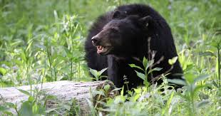 Why Are There So Many Bear Sightings In Smokies And Neighboring Areas? The Best Things To Do In Great Smoky Mountains More Than 500 People Report Garotestinal Illness After Visiting Johnson City Settles Garbage Truck Death Lawsuit For 125000 Mountain F100 Run Hot Rod Network Ended Equipment Auction Tuesday September 18 2012 7 00 Pm Pickup Truck Driver Charged In I81 Crash Local News Jd Humphries Service Manager Birmingham Freightliner Linkedin 1 Dead Multivehicle Crash Near National 2017 Jeep Wrangler Exterior And Interior Walkaround Franklin Ram Dodge Chrysler Auto Parts