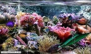 aquarium 3d et requin télécharger gratuitement la dernière version