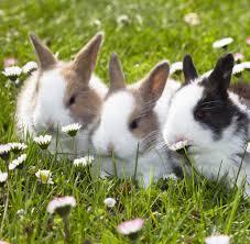 haustiere wie kaninchen domestiziert wurden welt