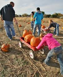 Pumpkin Farm Illinois Giraffe by The Top 28 Farms For Fall Fun In The Us 2014 Funtober
