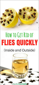 25+ Unique Natural Fly Repellant Ideas On Pinterest | Pine Sol ... How To Get Rid Of Flies In Backyard Outdoor Goods Diy Using Pine Sol To Of House Youtube 25 Unique What Kills Fruit Flies Ideas On Pinterest Pest Keep Away Repellent Rid Rotline Do I Get Solana Center For 3 Ways Around Your Dogs Water And Food Bowls Fruit Kill Do You Chicken Coop For Happier Hens Coops Those Pesky Flies From Pnic Areas Easy Home Remedy Coping With The Fall The New York Times Outdoors Step By