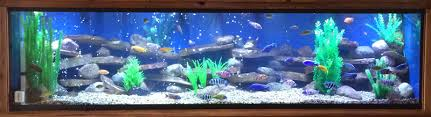 Extra Large Fish Tank Decorations by Lifetime Glass Aquariums