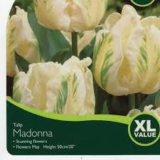 bulbs tulip madonna bulbs for sale mail order