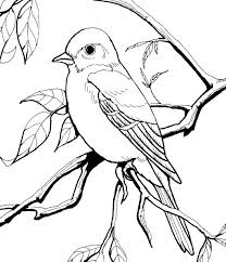 Coloring Pages For Burgess Animal Book And Bird
