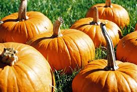 Pumpkin Farm In Palos Hills by 20 Prime Pumpkin Patches South Coast Botanic Garden Foundation