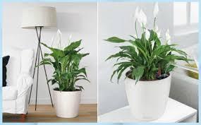 pflanzen schlafzimmer best of pflanzen fürs s feng shui home