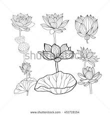 Vector Set Of Beautiful Monochrome Hand Drawn Lotus Flowers And Leaves Sketch Floral Collection In Black White Style For Coloring Page