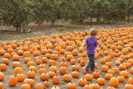 Faulkners Pumpkin Patch by Pumpkin Patches In Ventura County