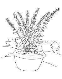 Lavender Flower Pot Coloring Page