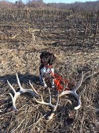german shorthaired pointer shed 2017 pa shed thread page 4