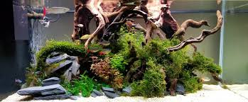 Planted Tank Contest - Aquarium Design   Aquascape Awards Planted Tank Contest Aquarium Design Aquascape Awards How To Create Your First Aquascaping Love Pin By Marius Steenblock On Pinterest The Month September 2008 Pinheiro Manso Creating Nature Part 1 Inspiration A Beginners Guide To Aquaec Tropical Fish Style The Complete Brief Progressive Art Of 2013 Xl Pt2 Youtube Aquadesign Dutch Sytle Aquascape Best Images On Appartment Iwagumi Der Der Firma Dennerle Ist Da Aqua Nano