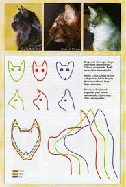 forest cat vs maine coon the difference between a siberian cat a forest cat and
