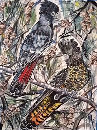 100 Casuarinas Black Red Tailed Cockatoos With