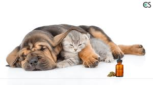 Introduction To Using CBD Hemp Oil For Pets (And Dosing Info) - CBD ... Best Cbd Oil For Dogs In 2019 Reviews Of The Top Brands And Grateful Dog Treats Canna Pet King Kanine Coupon Code Review Pets Codes Promo Deals On Offerslovecom Hemppetproducts Instagram Photos Videos Cbd Voor Die Diy Book Marketing Buy Cannabis Products Online Mail Order Dispensarygta April 2018 Package Cannapet Advanced Maxcbd 30 Capsules 10ml Liquid V Dog Coupon Finder Beginners Guide To Health Benefits Couponcausecom Purchase Today Your Chance Win A Free Cbdcannabis Hashtag Twitter