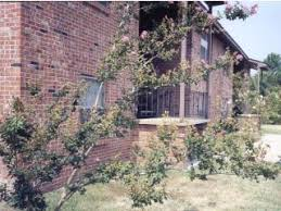 One Bedroom Apartments In Starkville Ms by Starkvegas Com Apartments And Real Estate In Starkville Ms Main