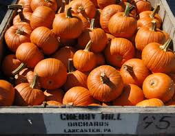 Pumpkin Picking Pa by Cherry Hill Orchards Outlet Lancaster County Pa Dutch