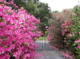 My Front Porch bellingrath gardens