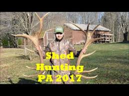 shed hunting pa 2017 youtube